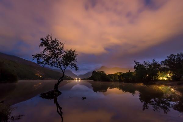 Lone Tree, Llyn Padarn IV by falsecast