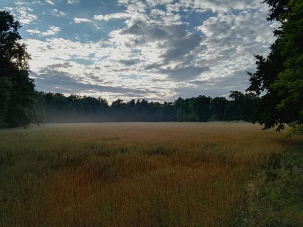 Forest Misty Fields by PentaxBro
