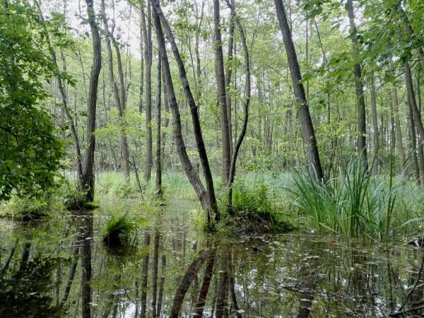 Forest Ponds by PentaxBro
