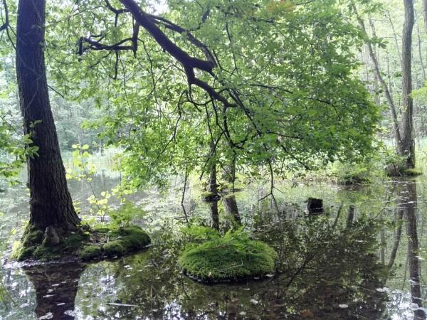 Forest Ponds 3 by PentaxBro