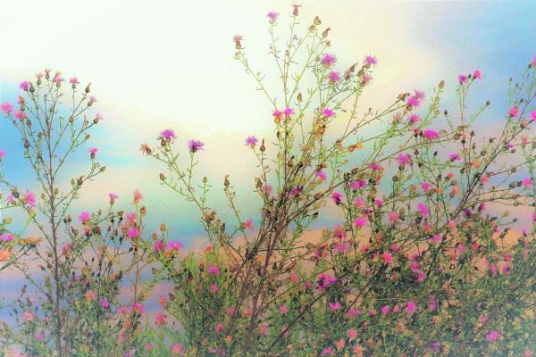Artsy Meadow Flowers  by PentaxBro