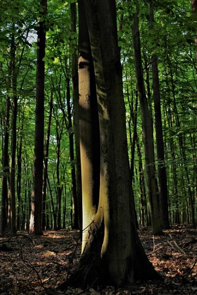 FOREST - Tree & Light by PentaxBro