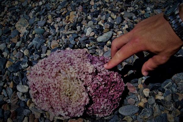 Pebble Beach by PentaxBro