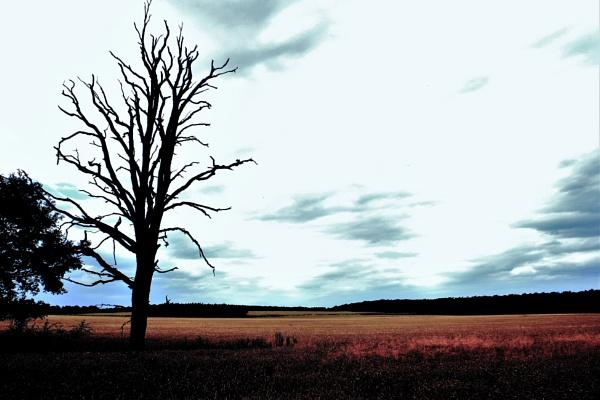Lone Tree Art by PentaxBro