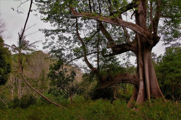Why I Love Trees by PentaxBro