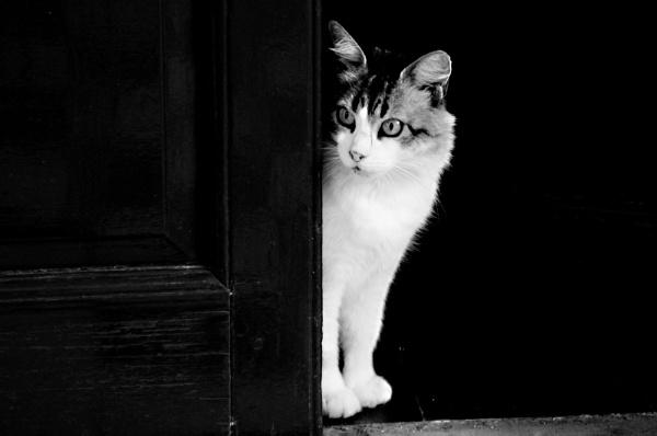 Melisenda en la puerta. by femape