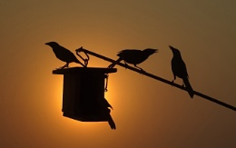 Morning Silhouette