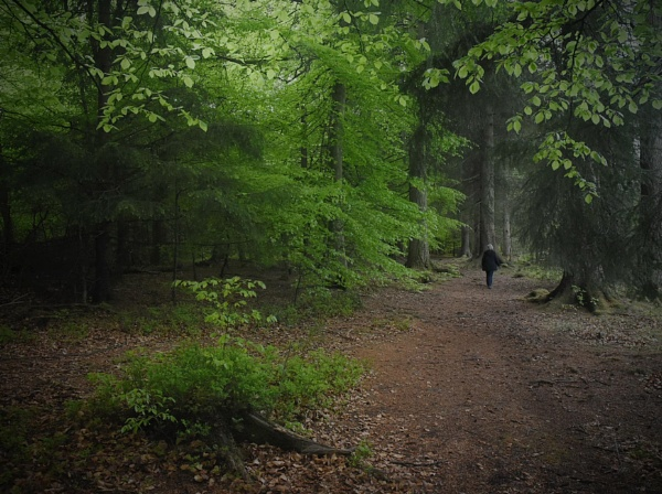 Through the Beechwood by MalcolmM