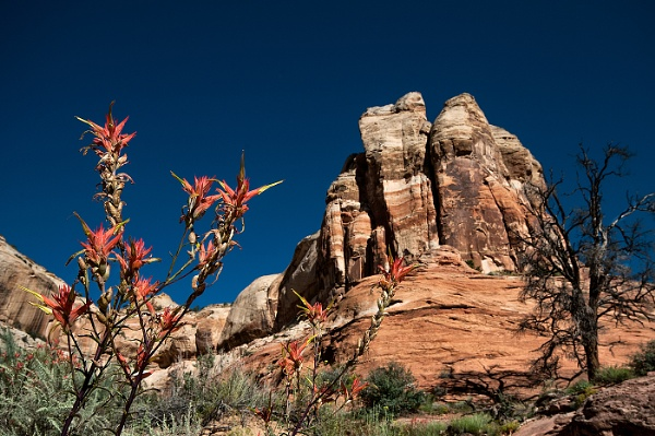 Red Flower Butte by Zydeco_Joe