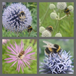 Bee montage