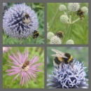 Bee montage by youmightlikethis