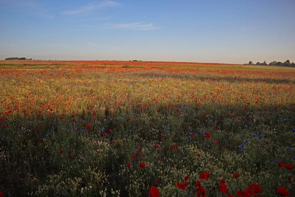 Motorway wildflowers by onetreehill