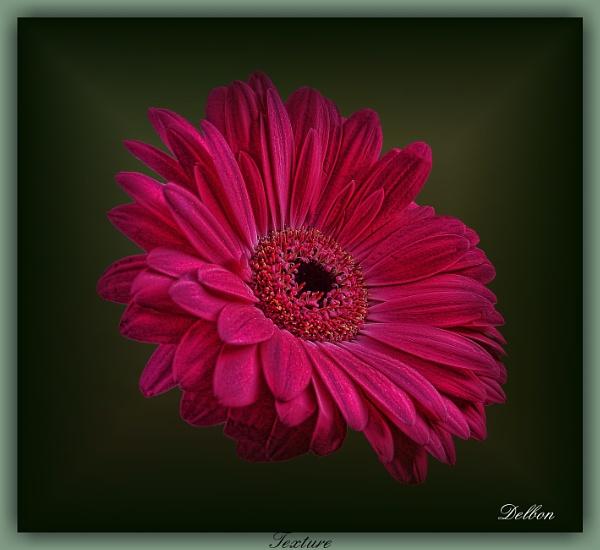 Texture by Delbon