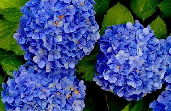 In Flower by ray_paul
