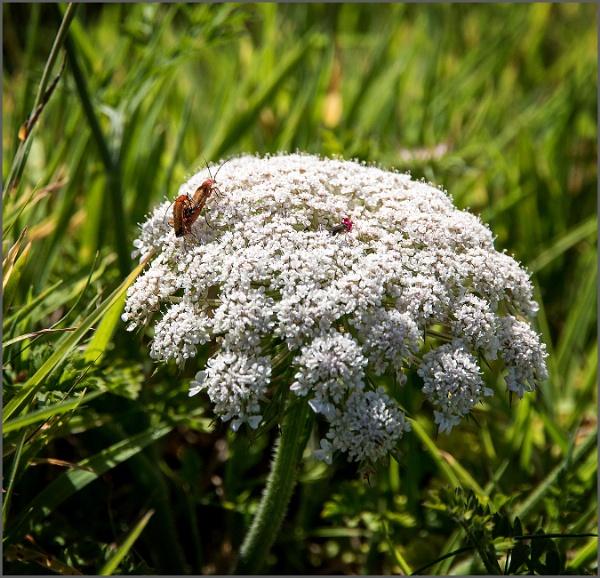 Tintagel flora and fauna by rambler