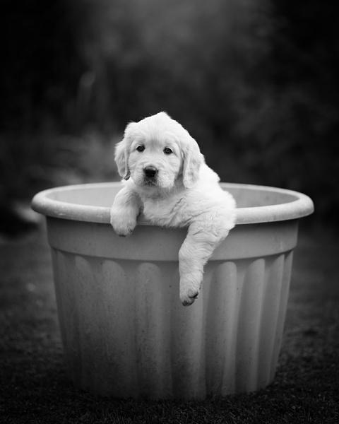 Puppy. by DannoM