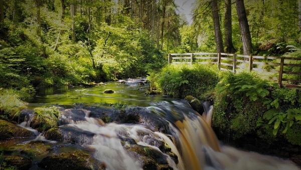 Glenariff Forest by atenytom