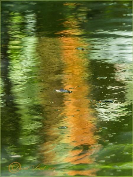 Reflections by DavidBird