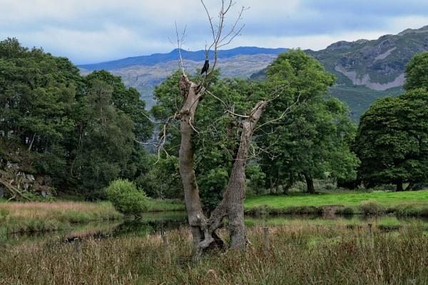 Dead Tree by ANNDORASBOX