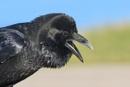 Raven by jm1