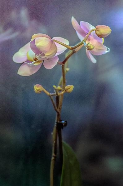 flowers by rocky41