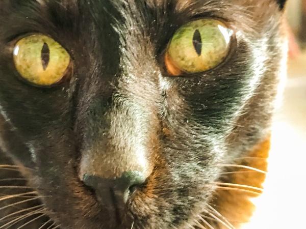 Cats eyes by caj26