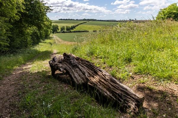 Fallen tree by Graysshootin