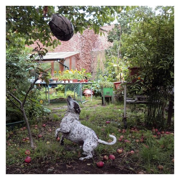 Backyard Boogie. by JeffHubbardPhotography