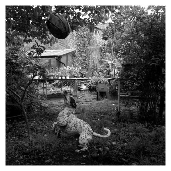 A BW Billy by JeffHubbardPhotography