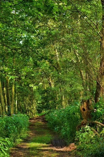 Woodland Walk by HelenMarie