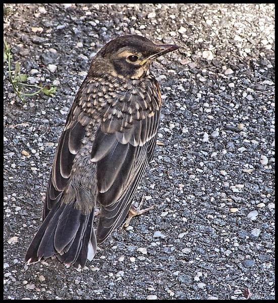 Bird on Asphalt by DonSchaeffer