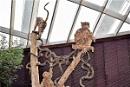 Three Monkeys by geoffgt