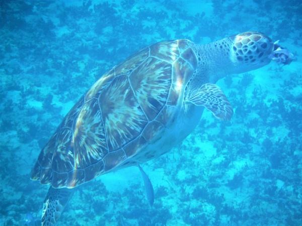 Turtle feeding by davyskid