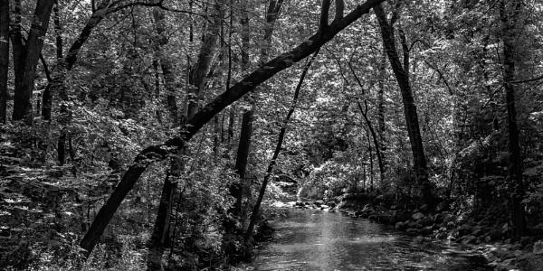 Creek by LarryG
