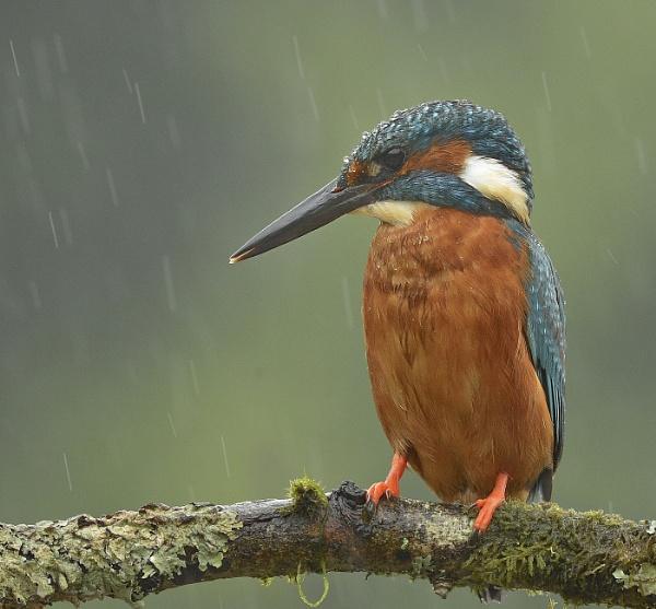 Wet Bird on a Stick by KBan