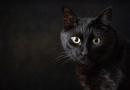The Black Furry Lump by cattyal