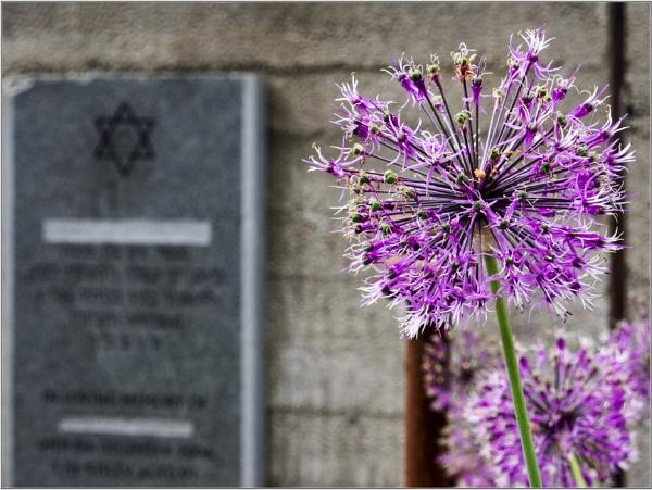 Memorial Allium by woolybill1