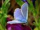 Pretty Blue by SUE118