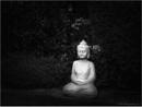 Buddha's in the Garden by Daisymaye