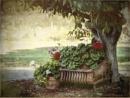 Shade Plants by Daisymaye