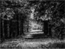Dandelion Road by Daisymaye
