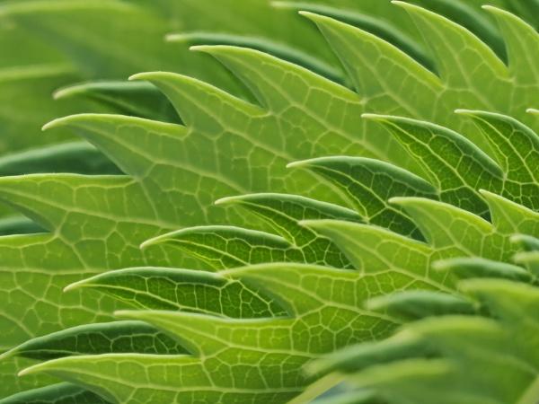 Leaf Wave by nclark