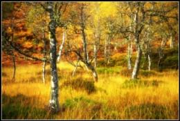 Autumnal Hues. Number 1