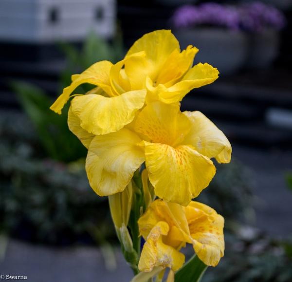 Floral by Swarnadip