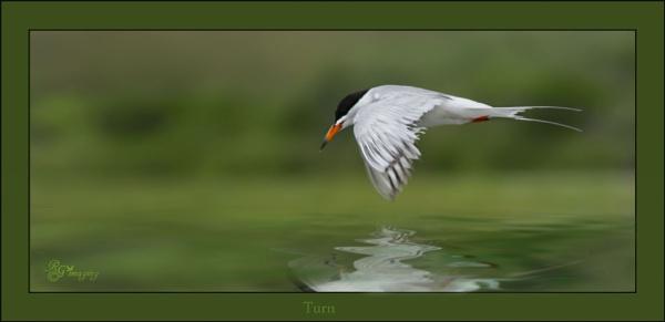 Turn flight by rgg