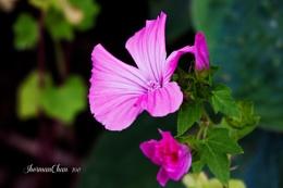 Summer Bloom