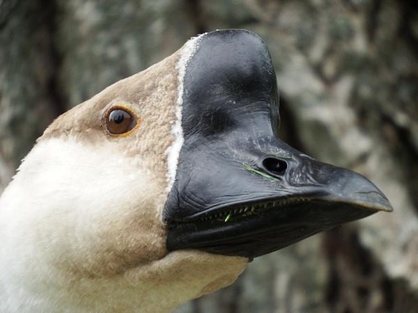 Psycho Goose by dj.lambert