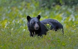Bears do it it the woods.