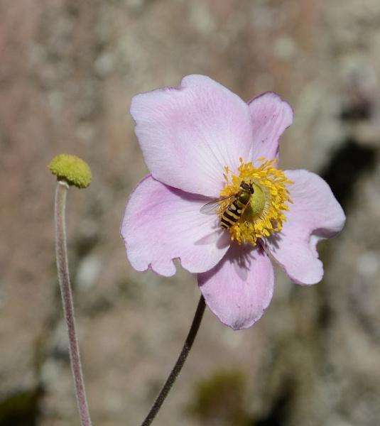 Biddulph Bug by DaveHoskins