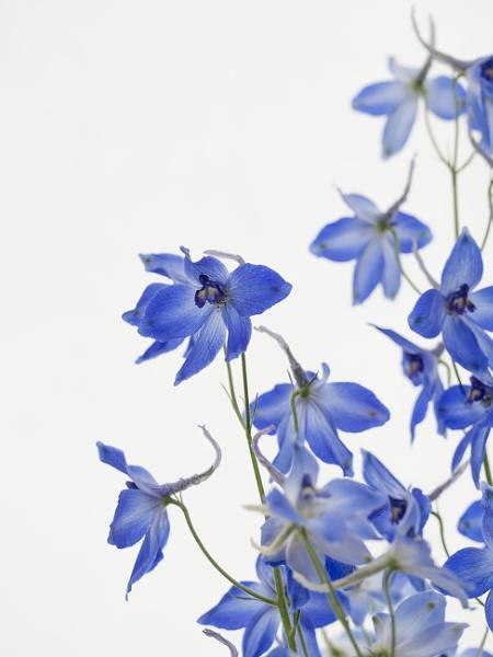 Delicate Blooms by Leedslass1